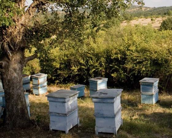 Honig Terroir – die Region eines Honigs