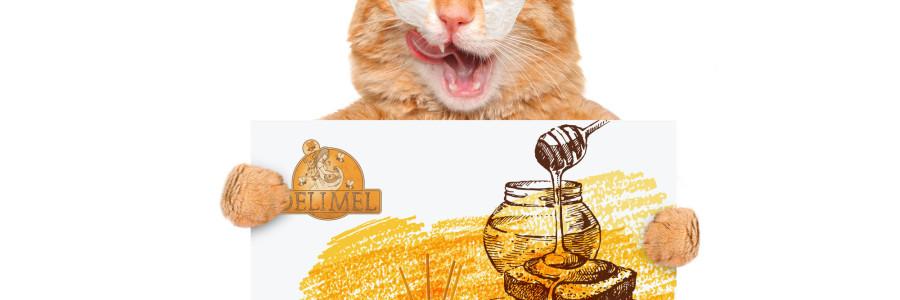 Honig: das natürliche Pflegeprodukt